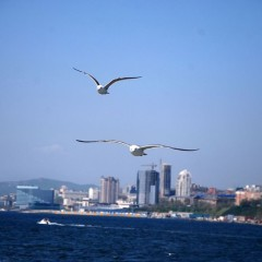 Vladivostok Boat Show will be held again